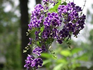 Flower.002