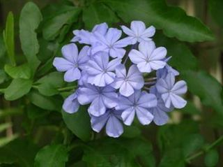Flowers.004