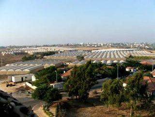 Nurseries of Gush Katif
