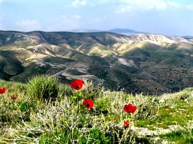 Poppy Israel